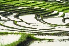 Paesaggio dei terrazzi del riso Fotografia Stock
