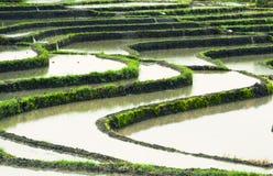 Paesaggio dei terrazzi del riso Fotografia Stock Libera da Diritti