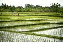 Paesaggio dei terrazzi del riso Immagine Stock
