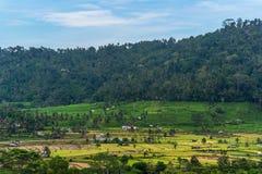 Paesaggio dei terrazzi del riso bello in Bali Immagini Stock