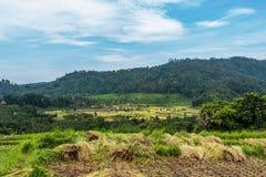 Paesaggio dei terrazzi del riso bello in Bali Fotografia Stock