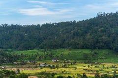Paesaggio dei terrazzi del riso bello in Bali Immagini Stock Libere da Diritti