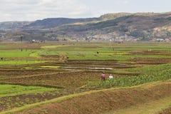 Paesaggio dei terrazzi del riso nel Madagascar Immagine Stock
