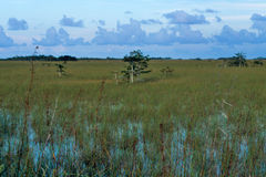 Paesaggio dei terreni paludosi fotografia stock libera da diritti