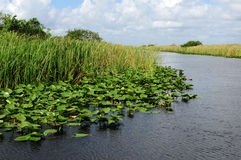 Paesaggio dei terreni paludosi della Florida Immagini Stock Libere da Diritti