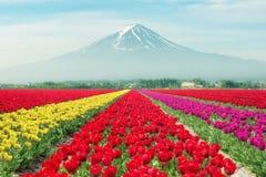 Paesaggio dei tulipani del Giappone con il Mt fuji Tulipani variopinti Fotografia Stock