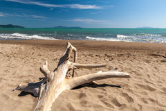 Paesaggio del ‹del †del ‹del †del mare con l'albero morto nella priorità alta Immagine Stock