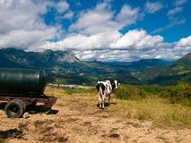 Paesaggio del basco-Navarrese con una mucca nella priorità alta Fotografia Stock