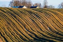Paesaggio del campo al tramonto, linee immagine stock libera da diritti
