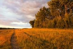 Paesaggio del campo con le balle della paglia Fotografia Stock