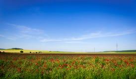 Paesaggio del campo del papavero Immagini Stock Libere da Diritti