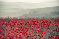 Paesaggio del campo del papavero nell'alba della campagna di estate con differe Fotografia Stock Libera da Diritti