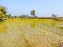 Paesaggio del campo del villaggio fotografia stock