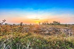 Paesaggio del campo di agricoltura nella stagione del raccolto Fotografia Stock