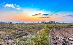 Paesaggio del campo di agricoltura nella stagione del raccolto Immagini Stock Libere da Diritti