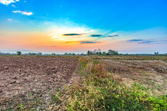 Paesaggio del campo di agricoltura nella stagione del raccolto Fotografia Stock Libera da Diritti