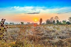 Paesaggio del campo di agricoltura nella stagione del raccolto Fotografie Stock