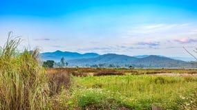 Paesaggio del campo di agricoltura nella stagione del raccolto con i fiori selvaggi Fotografia Stock