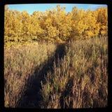 Paesaggio del campo di autunno con la struttura nera fotografia stock