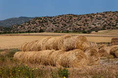 Paesaggio del campo di estate con il mucchio di fieno agricoltura Immagini Stock