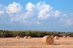 Paesaggio del campo di estate con il mucchio di fieno Comcept di agricoltura Fotografia Stock