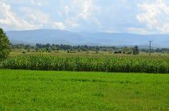 Paesaggio del campo di grano Fotografie Stock