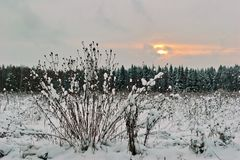 Paesaggio del campo di inverno nel tempo triste fotografia stock