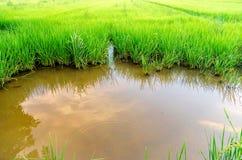 Paesaggio del campo di mais e del campo verde con il reflec del cielo e del fiume Fotografie Stock Libere da Diritti