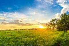 Paesaggio del campo di mais e del campo verde con il tramonto sull'azienda agricola, Immagini Stock