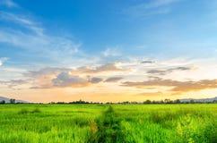 Paesaggio del campo di mais e del campo verde con il tramonto sull'azienda agricola, Immagine Stock Libera da Diritti