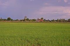 Paesaggio del campo di produzione del giacimento del riso, Tailandia Fotografie Stock