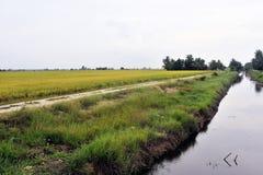 Paesaggio del campo di risaia Fotografia Stock Libera da Diritti