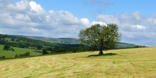 Paesaggio del campo e dell'albero Immagini Stock