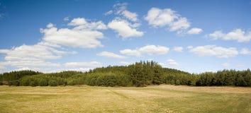Paesaggio del campo e della foresta immagini stock libere da diritti