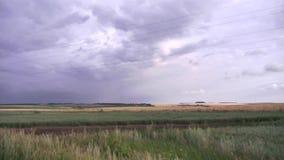 Paesaggio del campo enorme coperto di erba verde asciutta sotto il cielo grigio scena Cielo nuvoloso sopra il campo rurale prima  archivi video