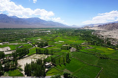 Paesaggio del campo in Leh Ladakh, India Fotografia Stock Libera da Diritti