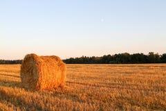 Paesaggio del campo del raccolto del mucchio di fieno Immagini Stock