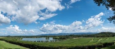 Paesaggio del campo del tè a nordico della Tailandia Fotografia Stock