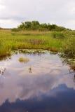 Paesaggio del canale dei terreni paludosi fotografie stock libere da diritti
