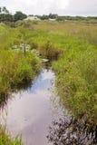 Paesaggio del canale dei terreni paludosi immagini stock libere da diritti