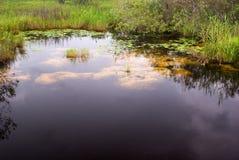Paesaggio del canale dei terreni paludosi fotografie stock