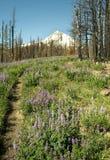 Paesaggio del cappuccio di Mt. Fotografie Stock Libere da Diritti