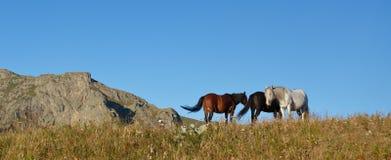 Paesaggio del cavallo Immagini Stock