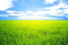 Paesaggio del cielo blu dell'erba verde del giacimento del riso Fotografie Stock Libere da Diritti