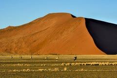 Paesaggio del deserto di Namib con il Gemsbok nella priorità alta Fotografia Stock