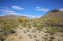 Paesaggio del deserto di Sonoran fotografia stock libera da diritti