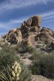 Paesaggio del deserto a Joshua Tree National Park Fotografia Stock Libera da Diritti