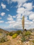 Paesaggio del deserto nella sosta di condizione del deserto di Anza-Borrego fotografia stock libera da diritti