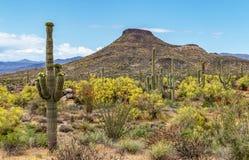 Paesaggio del deserto in primavera vicino a Scottsdale, AZ immagine stock libera da diritti