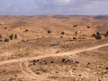 Paesaggio del deserto in Tunisia Fotografia Stock Libera da Diritti
